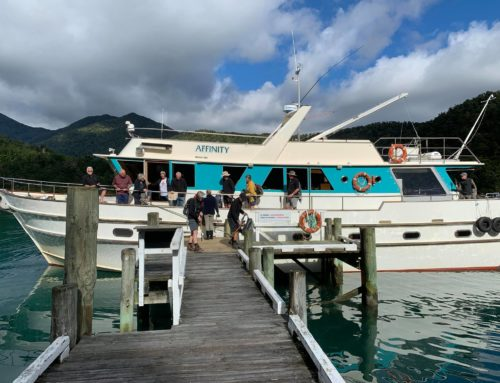 News from the road – Pelorus Sound & Golden Bay – November 2020